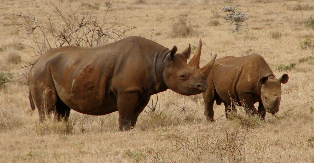 Yorkshire to Rwanda: Black Rhino Olmoti